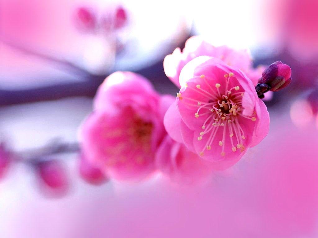 See full size image fresh flowers pinterest