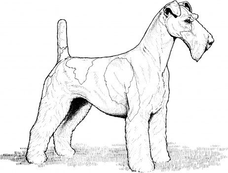 Wire Fox Terrier Coloring Page Super Coloring Dog Coloring Page Wire Fox Terrier Fox Terrier