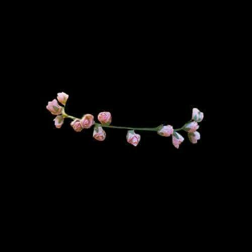 Pin by Kristine Vergara on vhs   Overlays tumblr, Overlays