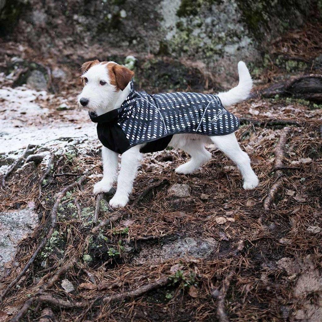 Rukka Hike Sport Sadetakki Dogs Corgi Animals