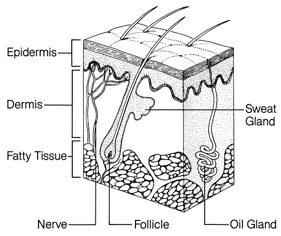 dry skin diagram