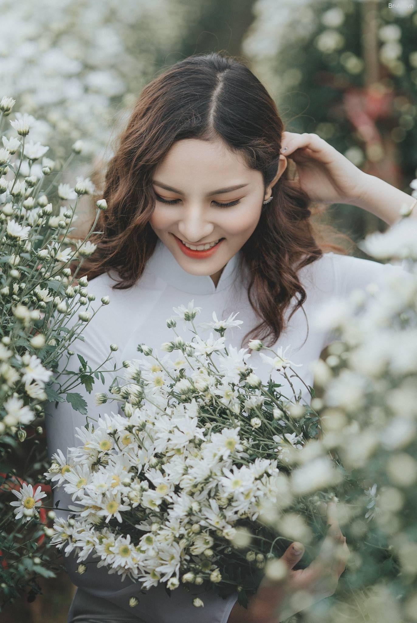 Ý nghĩa của loài hoa cúc họa mi | Hoa cúc họa mi, Hoa, Hoa cúc