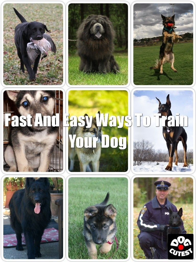 Caring For Your Dog Tips And Tricks In 2020 Your Dog Funny Dogs Dogs