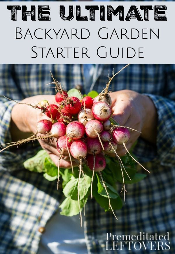 The Ultimate Backyard Garden Starter Guide  This Collection Of DIY Gardening  Tips Will Give You