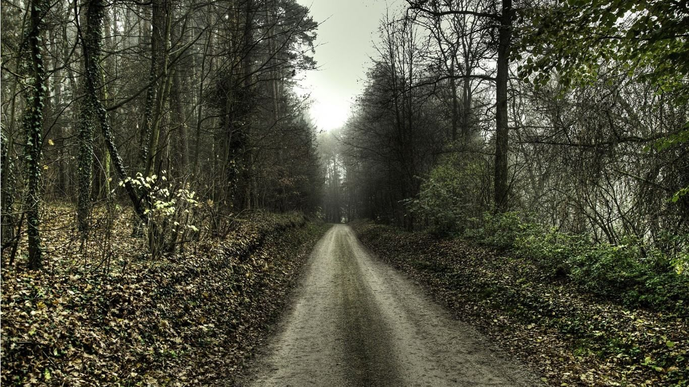 Wallpapers Hostpost 1300x1300 Creepy Forest Backgrounds 35