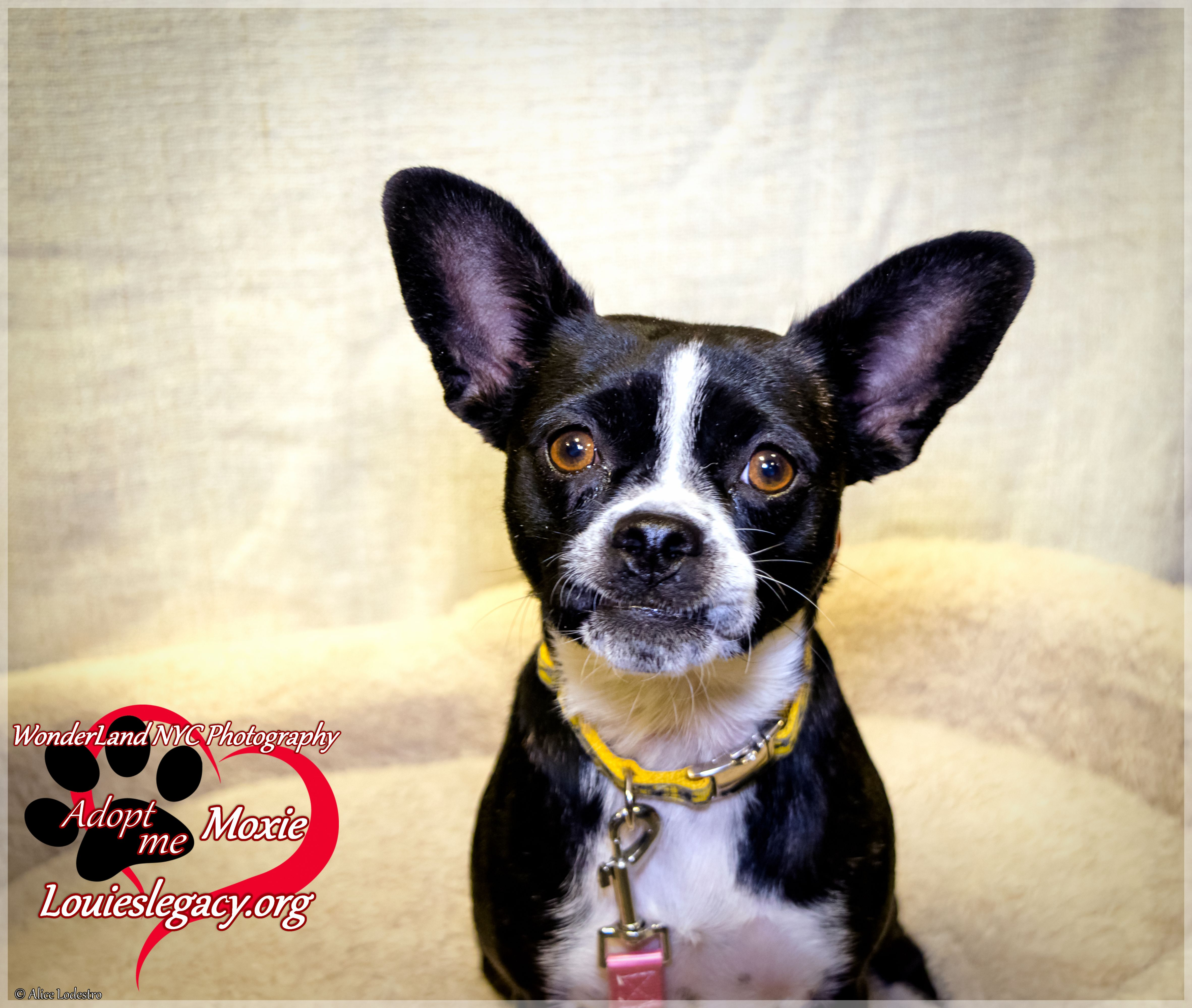 Adopt Moxie On Petfinder Cute Animal Pictures Animal Shelter Animal Rescue