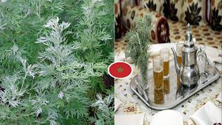 أهم فوائد عشبة الشيبة أو شجرة مريم Christmas Ornaments Holiday Decor Novelty Christmas