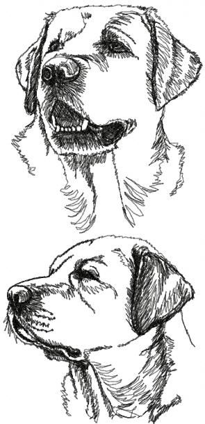 labrador retriever set continuous line drawings