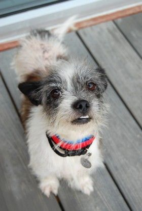 Best Friends In Atlanta Dog Adoption Shih Tzu Mix Cat Help