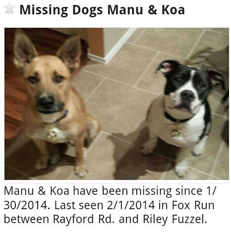 Lost 2 Dogs Http Houston Craigslist Org Laf 4315445869 Html Manu Koa Have Been Missing Since 1 30 2014 Last Seen 2 1 Losing A Pet Dogs Pets