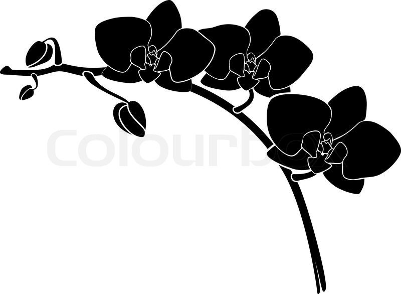 Vector Orchid Silhouette Vector Colourbox Flower Stencil Flower Silhouette Silhouette Ornaments