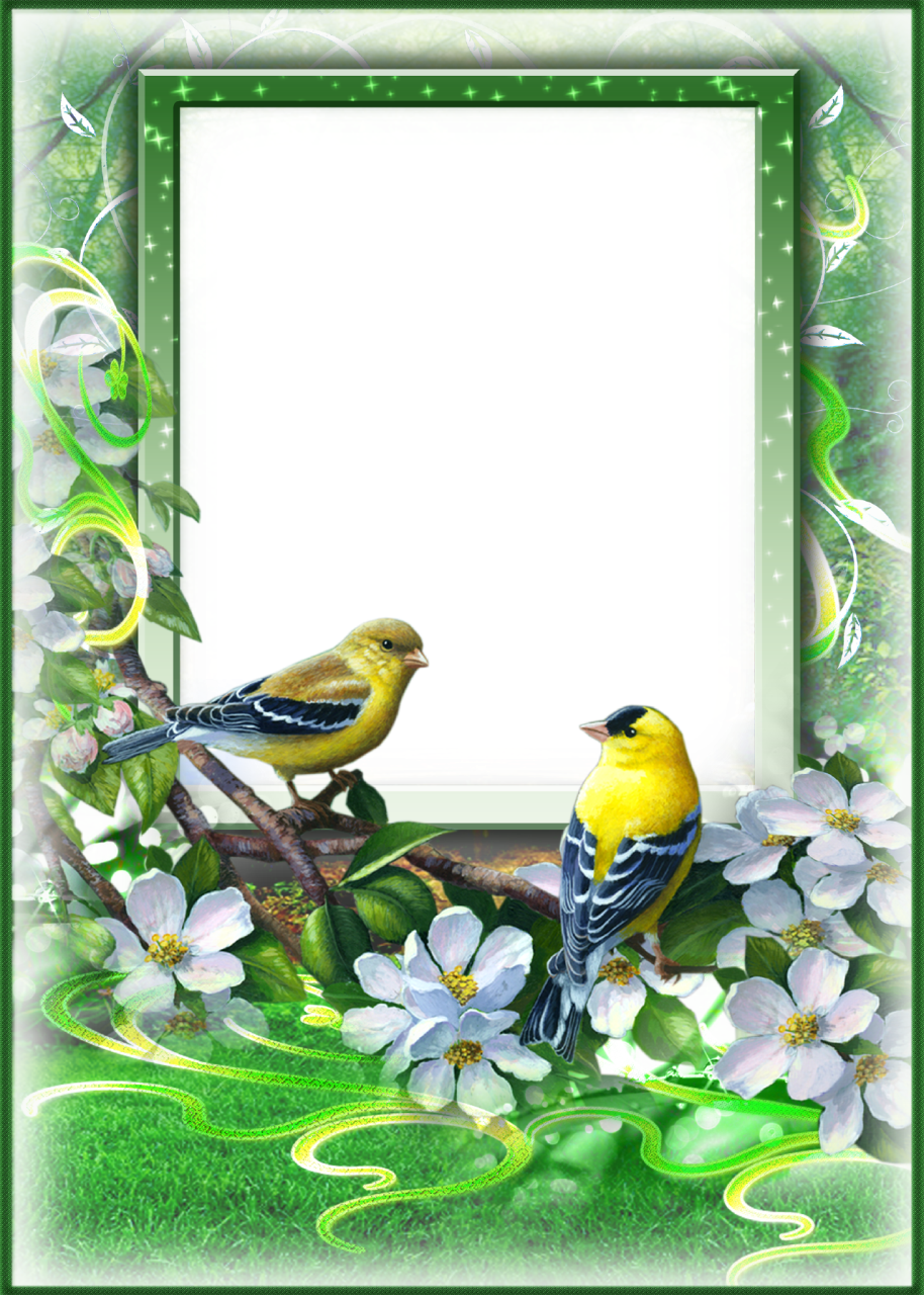 Picture green photo frames digital pictures