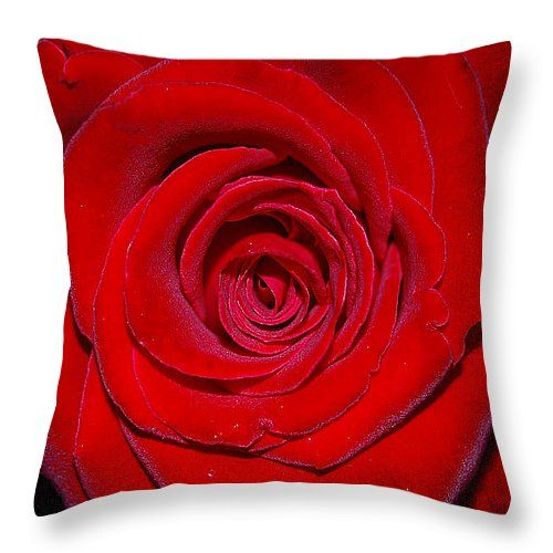 "close-up di una rosa rossa tiro cuscino 14 ""x 14"" #business #b2bmarketing #socialmediamarketing #contentmarketing #marketingtips #digitalmarketing #marketing"