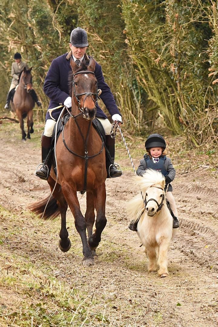 Pin by Brianna on Equestrian (With images) Horses, Cute