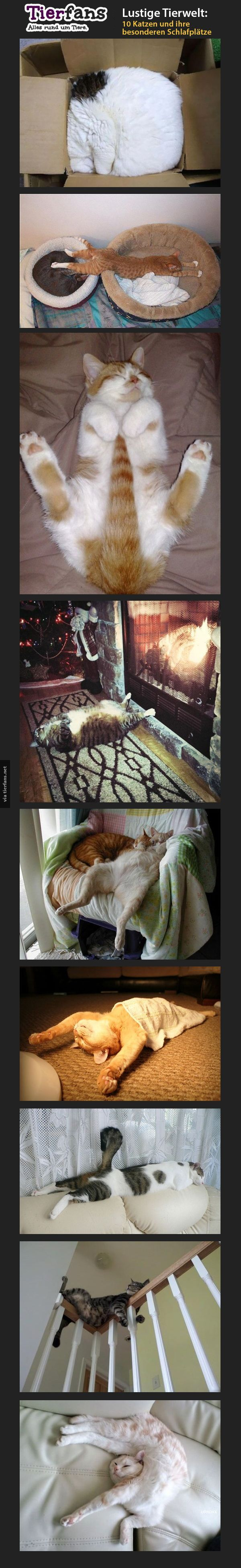 9 Katzen Die Keine Ahnung Haben Wie Man Schlaft Katzen