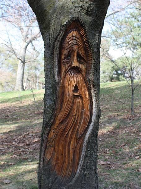 Tree carvings toronto photos parks high park a