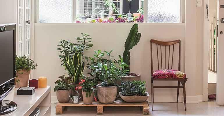 Revista MinhaCASA - Conquiste um jardim