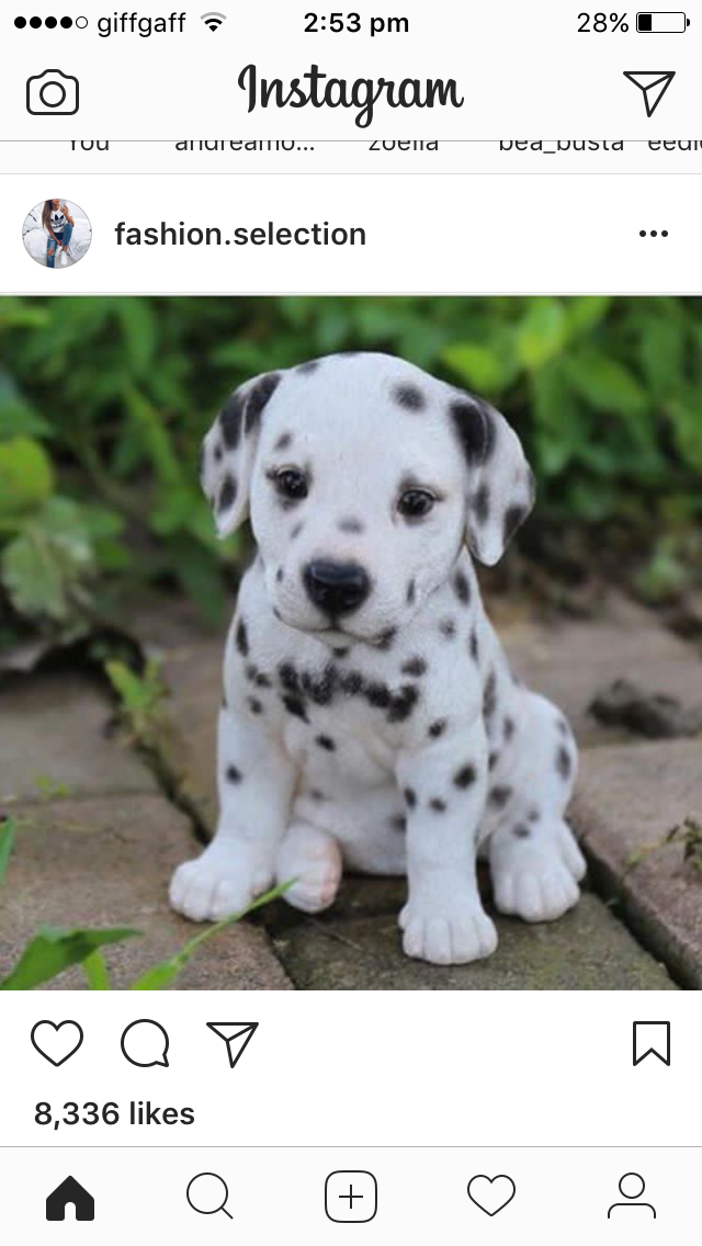 Pin By Bella On Doggos Cute Baby Animals Cute Animals Cute Puppies