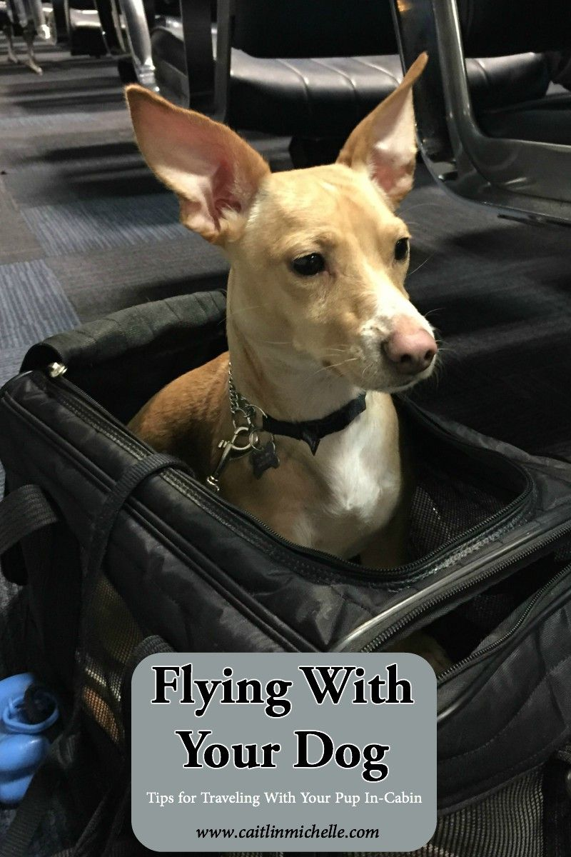 Home Caitlin Michelle Dog Travel Dogs Flying Dog