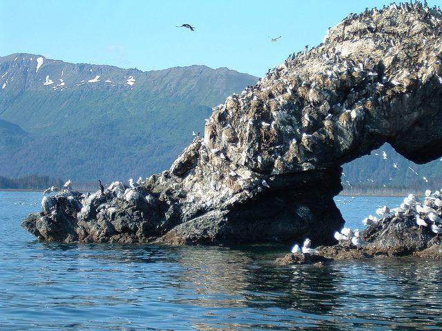 Gull Rock, across bay from Homer, Alaska