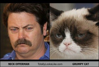 Nick Offerman Looks Like Grumpy Cat