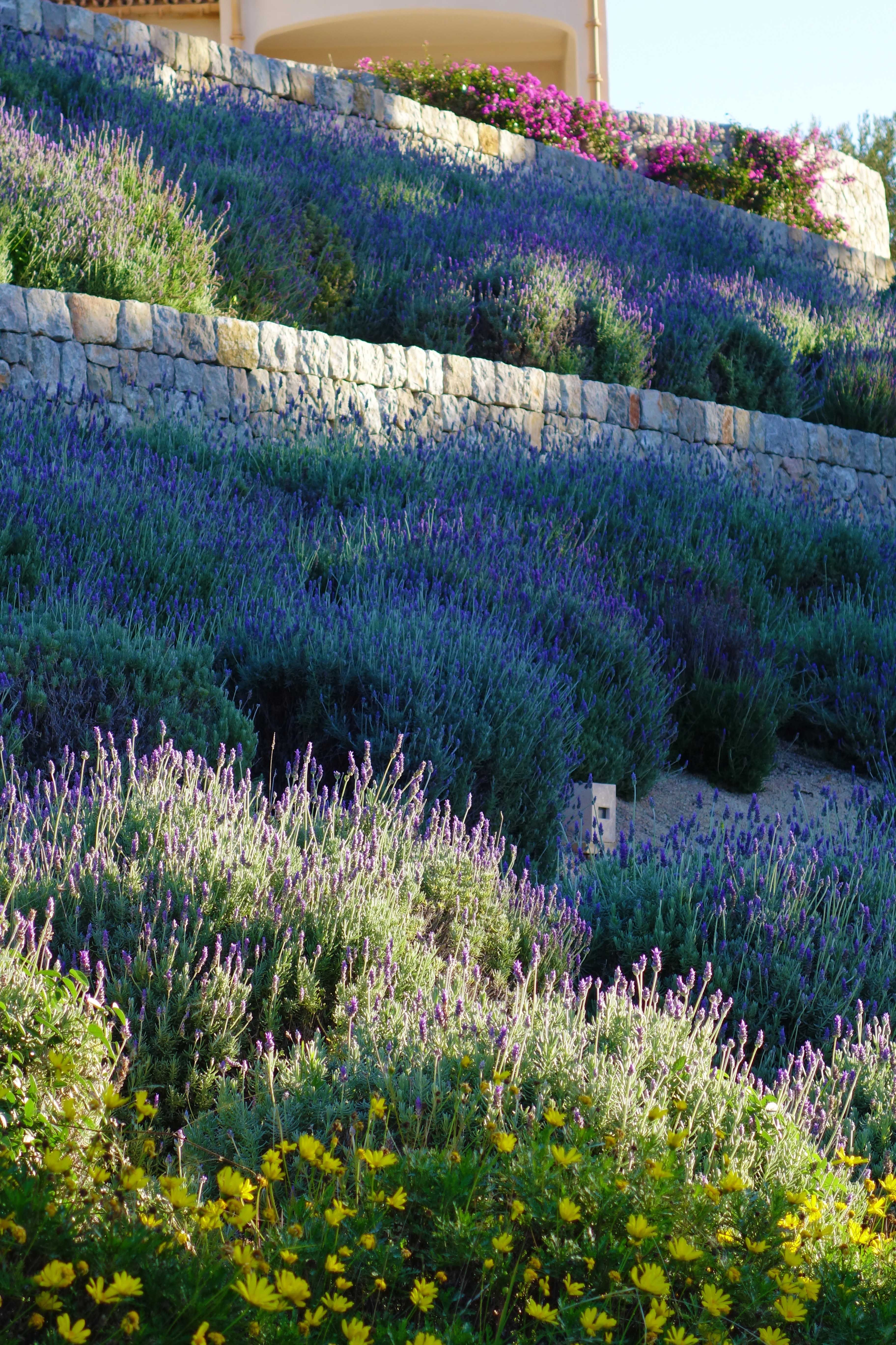 Lavender Slope Stone Walls Garden Unique Gardens Sloped Backyard