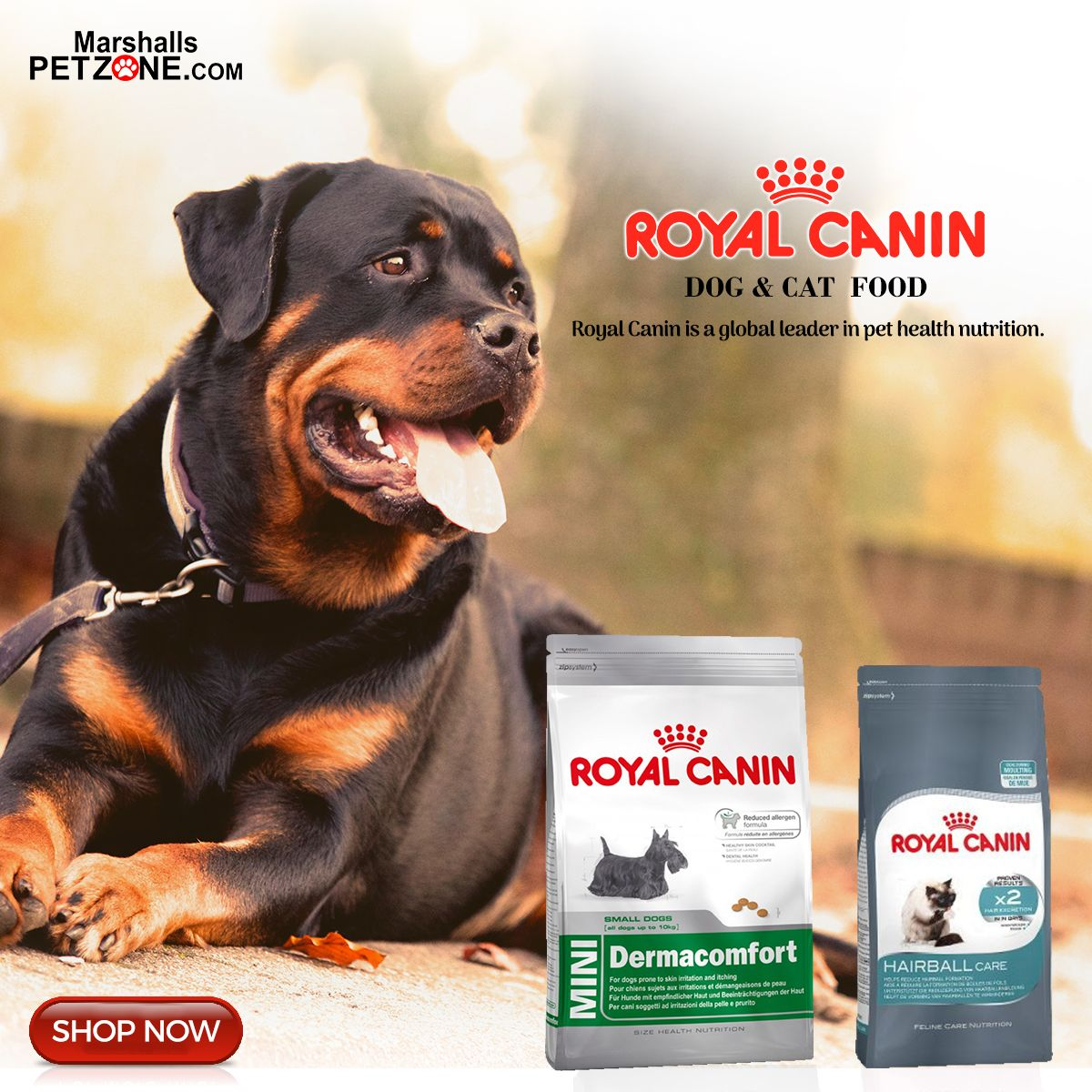 New Arrivals From Royal Canin Click On Image To Shop Dog Food