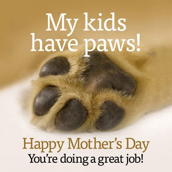 My Kids Have Paws Happy Mothers Day Card Etsy In 2021 Happy Mothers Pet Mom Happy Mother S Day