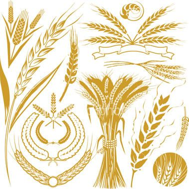 small wheat sheaf vector - Google Search | Wheat tattoo, Painted rocks,  Line drawing