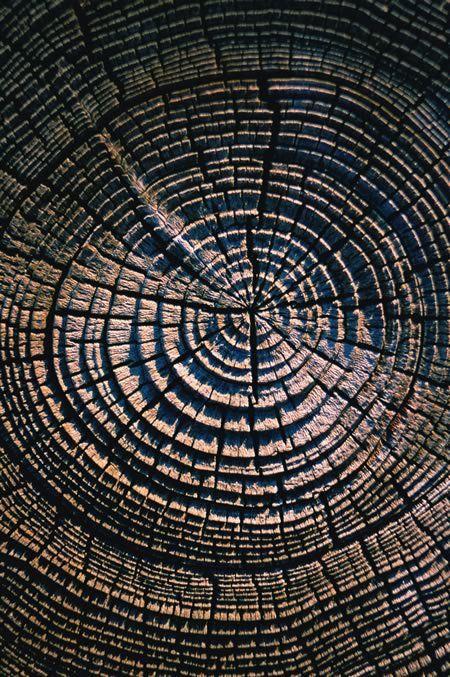 In San Francisco Ca Baumringe Texturen Muster Und Holz
