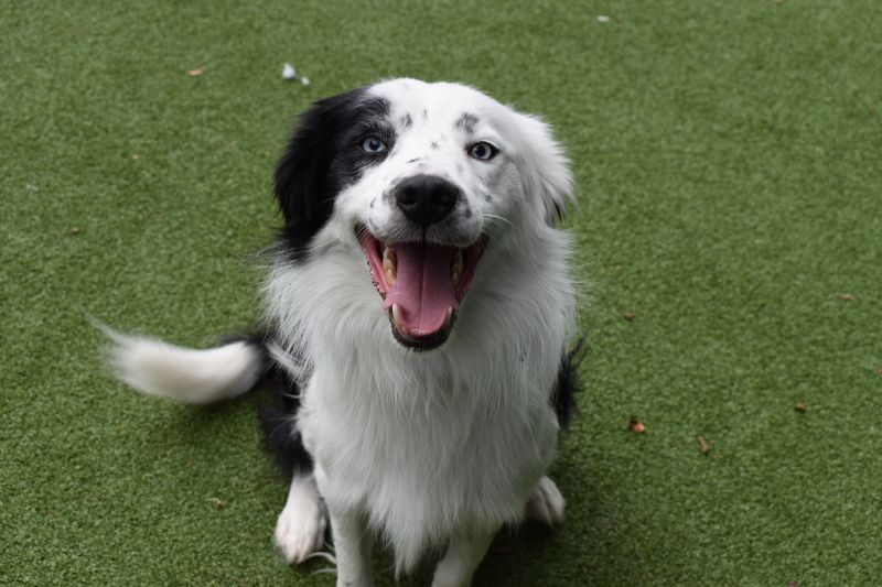 Abandoned Pair Of Farm Dogs Find New Life At Battersea Farm Dogs Dogs Battersea Dogs