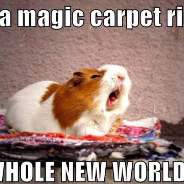 Carpet Quote: On A Magic Carpet Ride... A Whole New World... Haha After