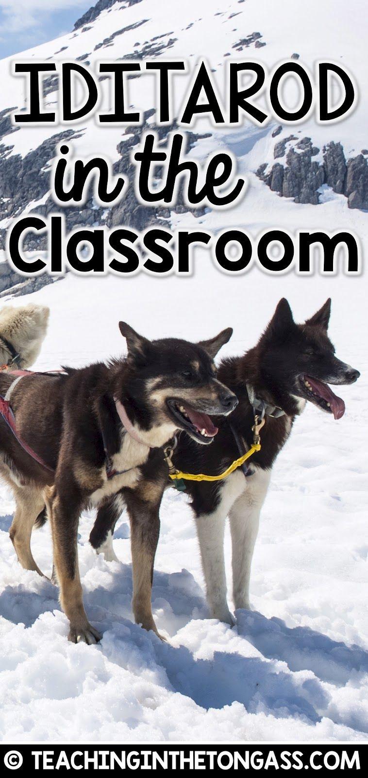 Iditarod Activities For The Classroom Iditarod Unit Dog