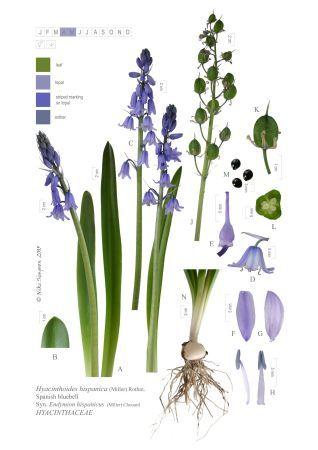 digital botanical illustration? hUmmm