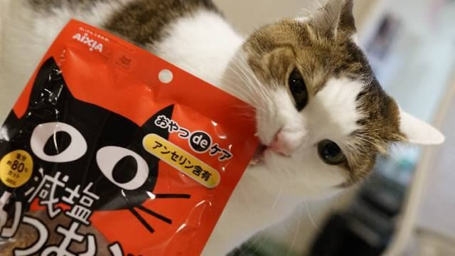 Something Delicious For Your Cats Is Coming Your Way