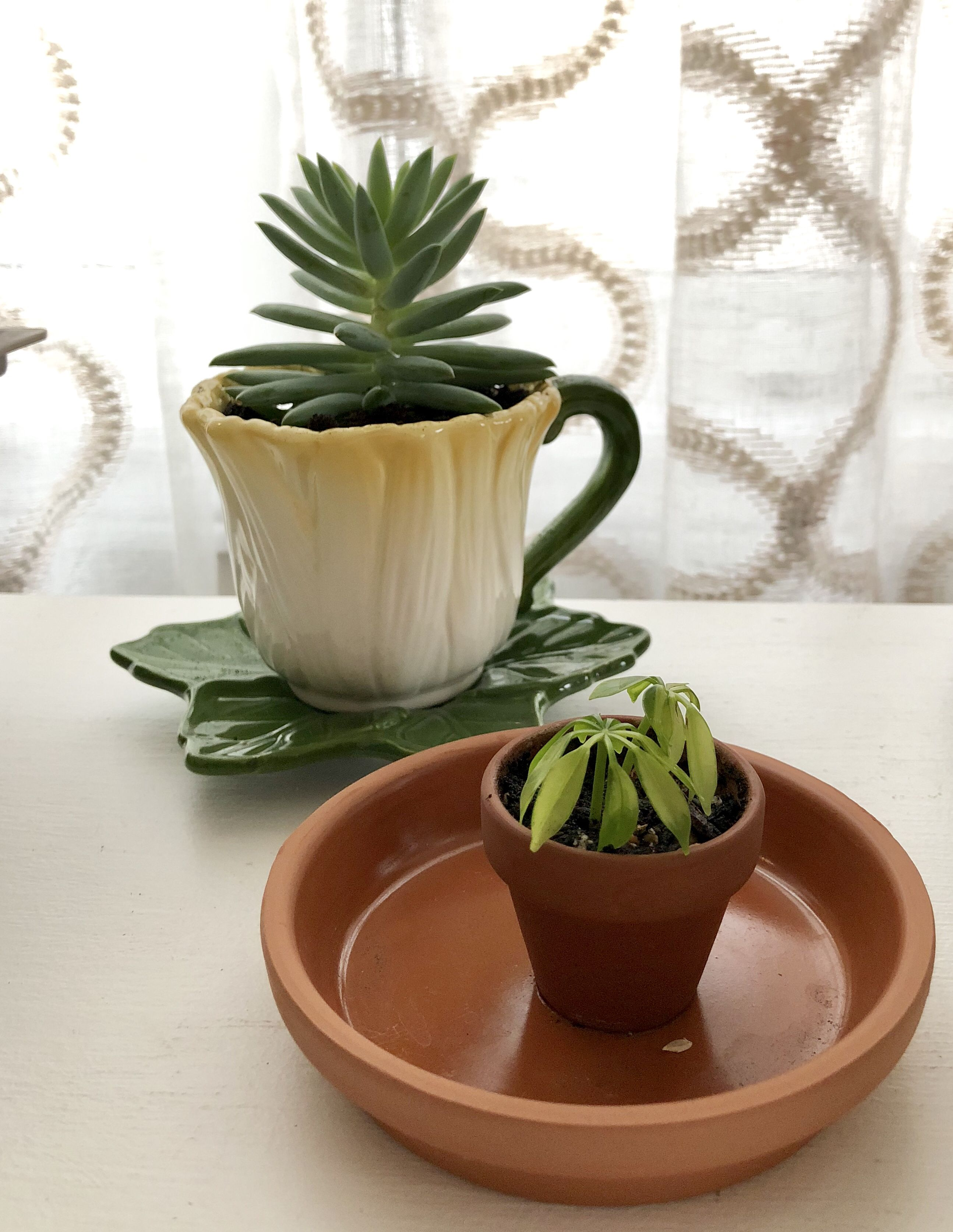 Tiny House Plants With Images
