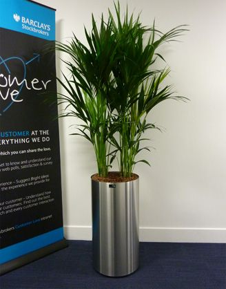 Benholm Group, Landscaping & Office Plants in Glasgow ...