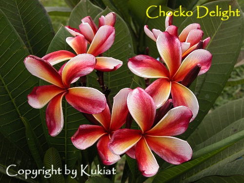 Chocco Delight A Beauty From India Flower Pot Design Sympathy Flowers Flower Pots