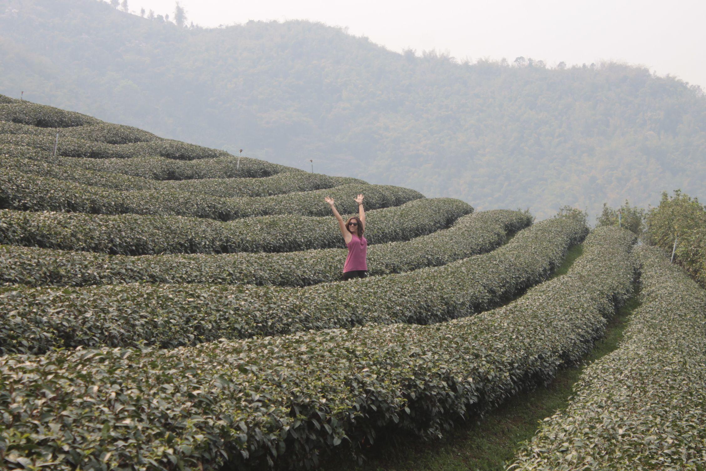 Jugando en los campos de té