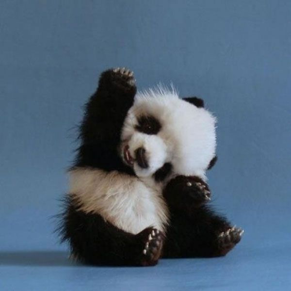 27 Of The Cutest Baby Animal Photos You Will Ever See ... The Cutest Baby Animal In The World