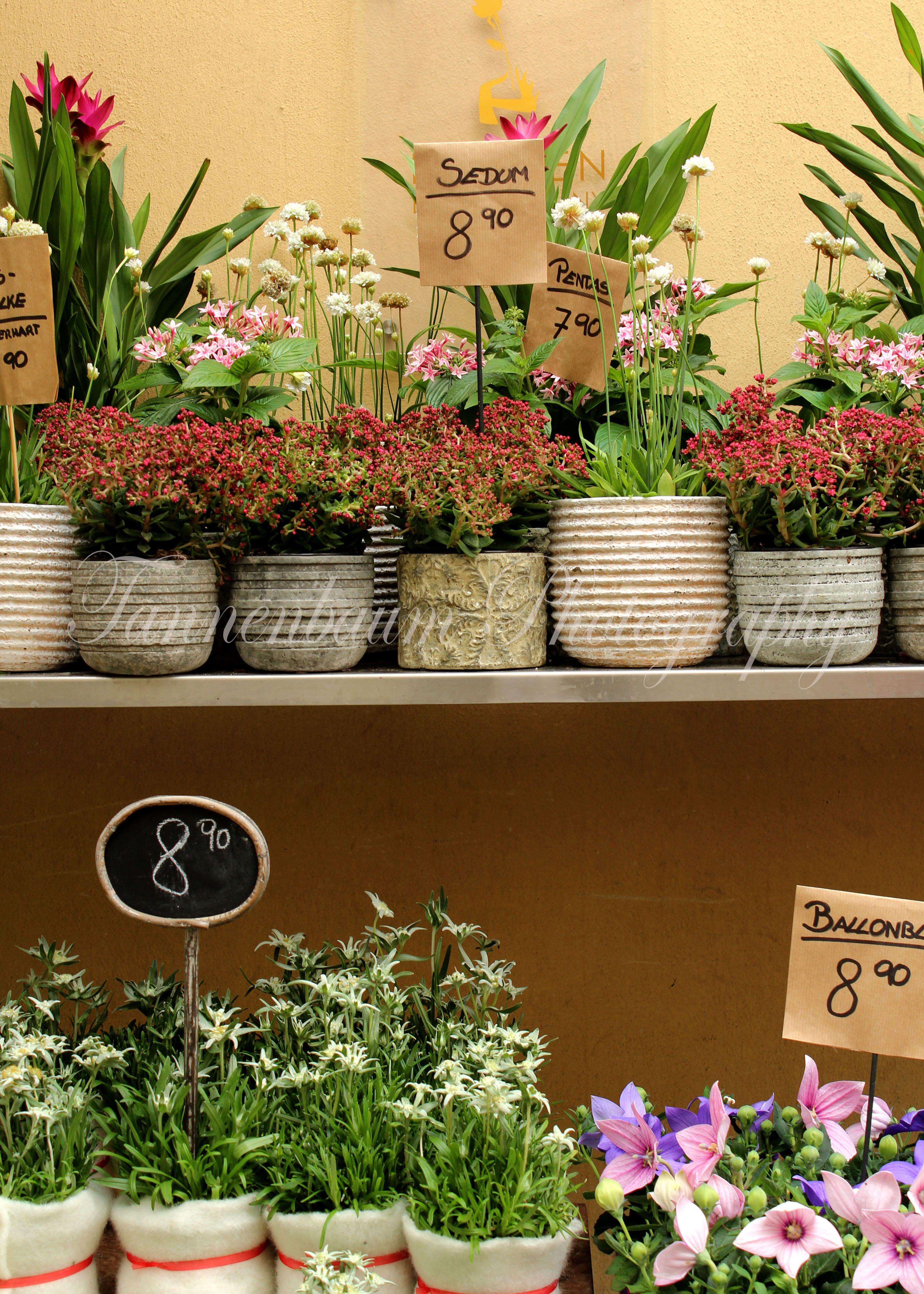 Flower Shop in Innsbruck, Austria Flower shop, Planter