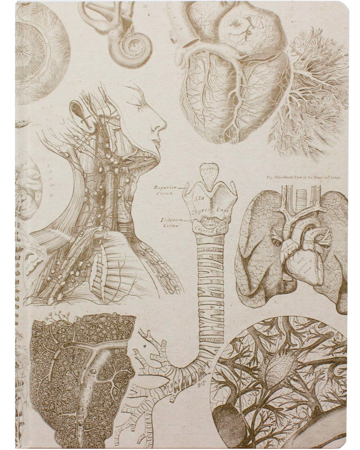 Human Anatomy XL Journal | Anatomy, Sketchbooks and Vintage