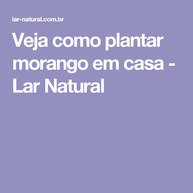 Veja como plantar morango em casa - Lar Natural