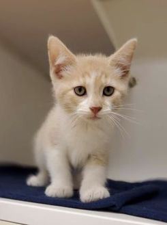 Adopt A Pet Petsmart Charities Pets Pet Adoption Kittens