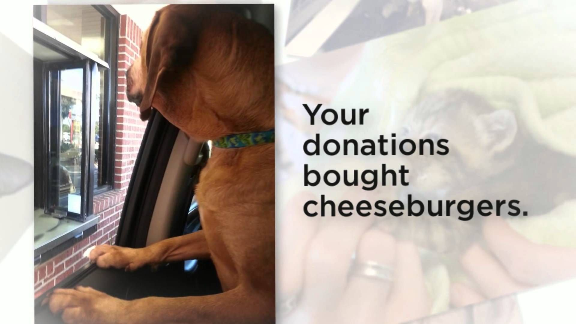 Nate's Honor Animal Rescue 2015 Giving Challenge