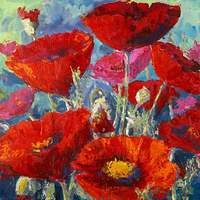 Colorful Poppies by Jennifer Bowman