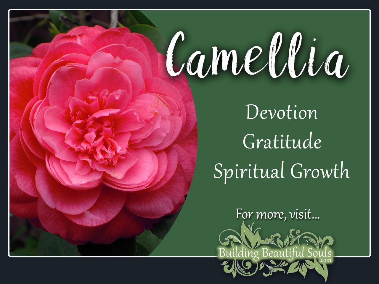 Camellia Meaning Symbolism Flower Meanings Flower Meanings Healing Flowers Flower Bouquet Wedding
