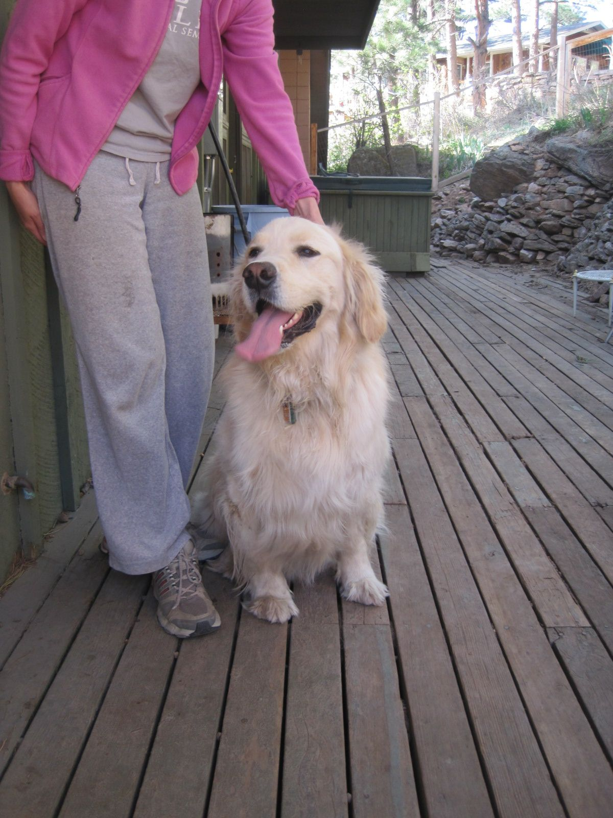 Bennett Is A 2 Year Old Golden Retreiver Who Was Surrendered By