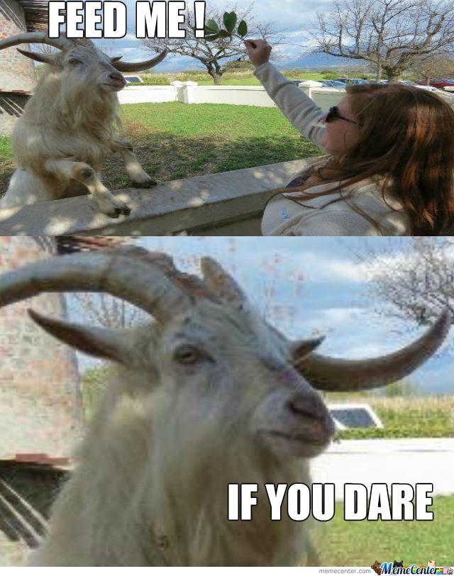 goat farmer memes - Google Search