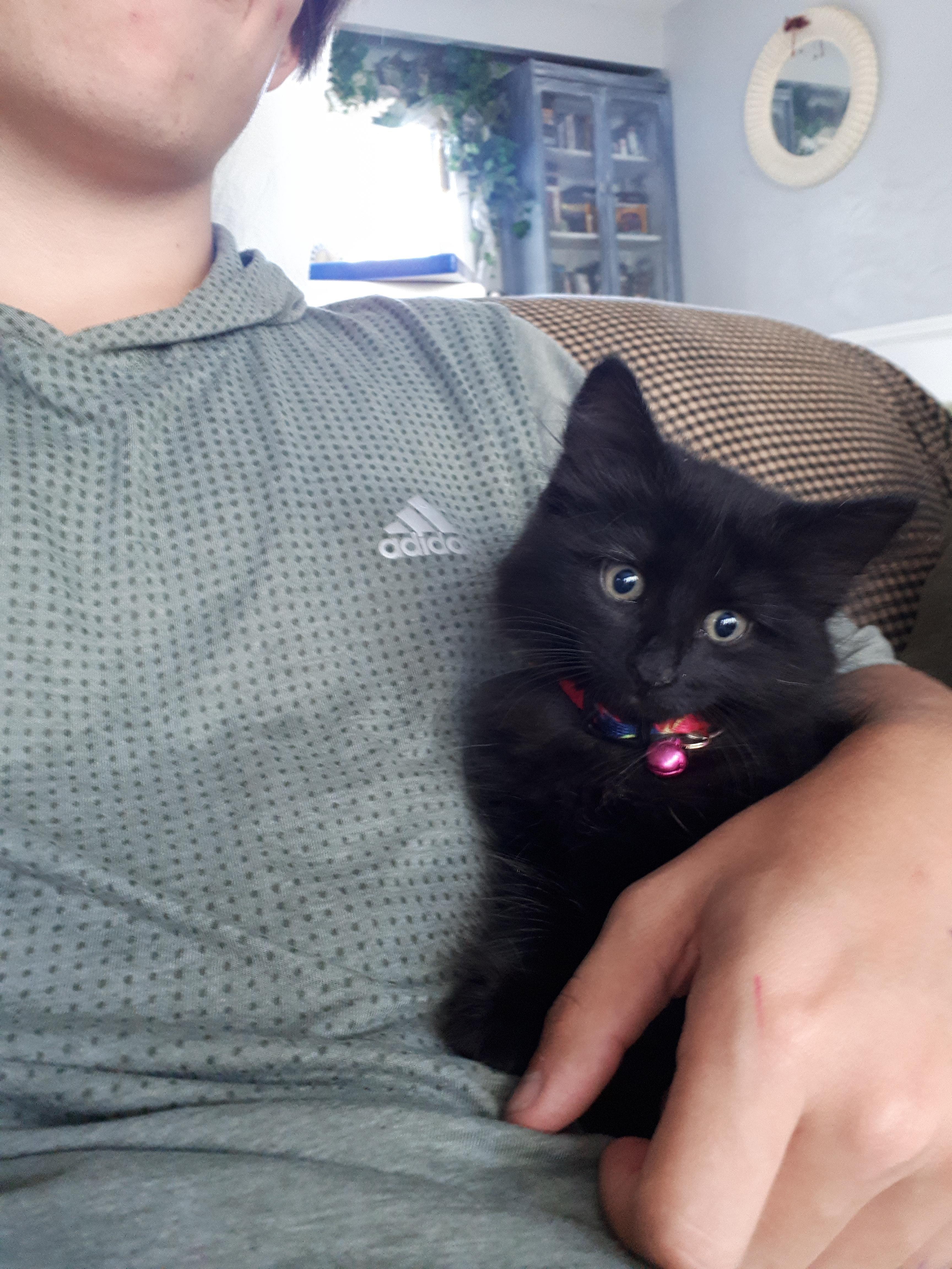 My Kitten Boo The Day We Got Her Https Ift Tt 2rhe2qc Cute Puppies Cats Animals Cats Black Cat Fur Baby Cat
